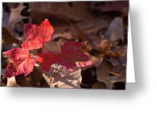 Maple Morning Greeting Card