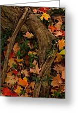 Maple Root Greeting Card