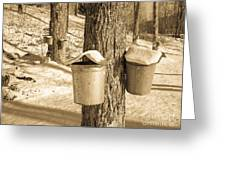 Maple Sap Buckets Greeting Card