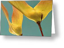 Maple Seed Pods Greeting Card