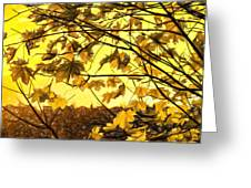 Maple Sunset - Paint Greeting Card
