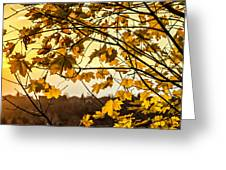 Maple Sunset Greeting Card