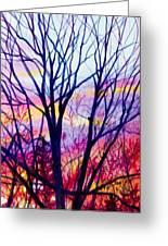 Maple Tree Sunset Greeting Card
