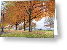 Maple Trees In Portland Downtown Park In Fall Greeting Card
