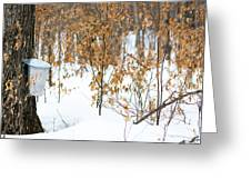 Maple Woods Greeting Card