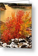 Maples Along The Palisades Greeting Card