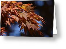 Maples In Spring 2013 Greeting Card