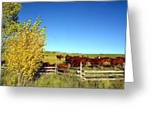 Marabou Cattle Herd Greeting Card