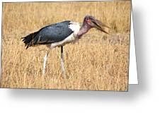 Marabou Stork Kenya Greeting Card