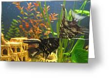 Marble Angelfish Kisses Greeting Card
