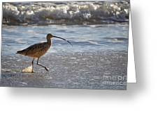 Marbled Godwit 2 Greeting Card