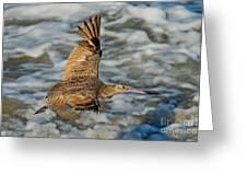 Marbled Godwit Flying Over Surf Greeting Card