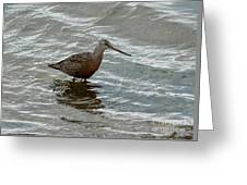 Marbled Godwit Greeting Card