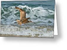 Marbled Godwit Over Surf Greeting Card