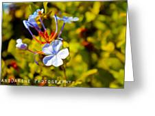 March Flower Greeting Card