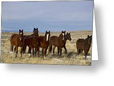 Mares   #0844 Greeting Card