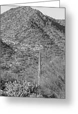 Maricopa Hills Greeting Card