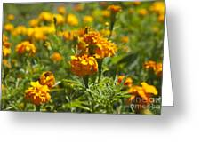 Marigold Flowers Greeting Card
