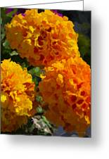 Marigold Mops Greeting Card