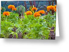 Marigolds Greeting Card
