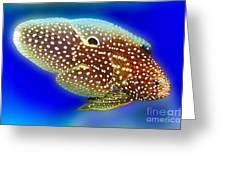 Marine Betta Fish Greeting Card