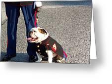 Marine Bull Dog Greeting Card by Kenneth Summers