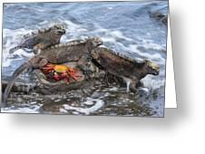 Marine Iguana Trio And Sally Lightfoot Greeting Card