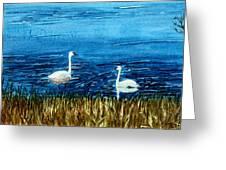 Marion Lake Swans Greeting Card