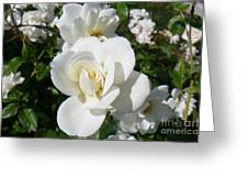 Mariposa Blanca Greeting Card