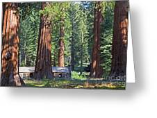 Giant Sequoias Mariposa Grove Greeting Card