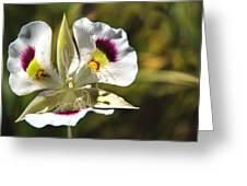 Mariposa Lily Greeting Card