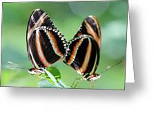 Mariposas Greeting Card