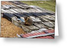Marmot Resting On A Railroad Tie Greeting Card