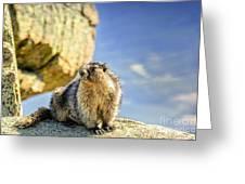Marmot Greeting Card