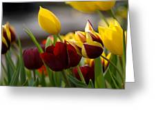Maroon And Gold Tulips Greeting Card
