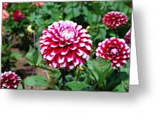 Maroon And White Flower Greeting Card
