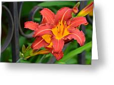 Maroon Day Lilies Greeting Card