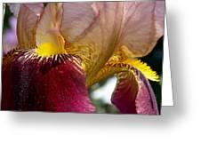 Maroon Iris Greeting Card
