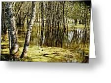 Marsh At Cheadle Lake Greeting Card