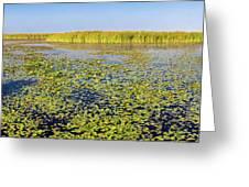 Marsh At Edge Of Lake Okeechobee Greeting Card