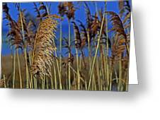 Marsh Grass At Northside Park Greeting Card