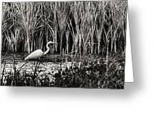 Marsh Hunter Greeting Card