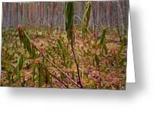 Marsh Labrador Tea After Winter Greeting Card