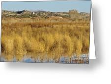 Marsh Lands In Wildlife Refuge Greeting Card