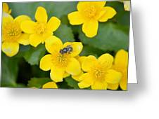 Marsh Marigold Greeting Card
