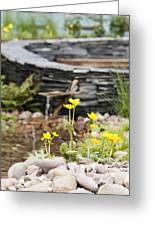 Marsh Marigolds Greeting Card