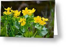 Marsh Marigolds Greeting Card