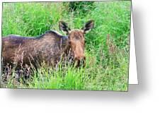 Marsh Moose Greeting Card