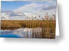 Marsh Reed Greeting Card