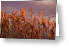 Marsh Reeds Aglow  -  150218a-162 Greeting Card